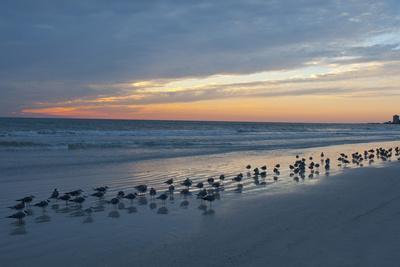 https://imgc.allpostersimages.com/img/posters/cloudy-sunset-on-crescent-beach-siesta-key-sarasota-florida-usa_u-L-PN71P80.jpg?artPerspective=n