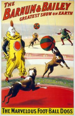 Clown Perform with the Marvelous Foot-Ball Dogs in the Barnum and Bailey Circus, 1900