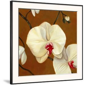 Orquideas Blancas I by Clunia