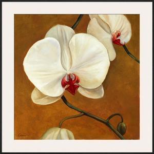 Orquideas Blancas II by Clunia