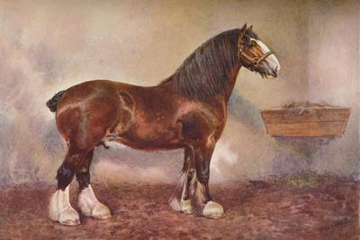 https://imgc.allpostersimages.com/img/posters/clydedale-stallion-prince-of-albion-c1900-c1910_u-L-Q1EFM710.jpg?artPerspective=n