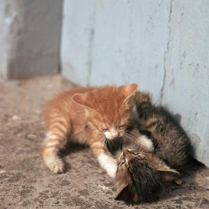 Kittens in Heracleion, Crete by CM Dixon