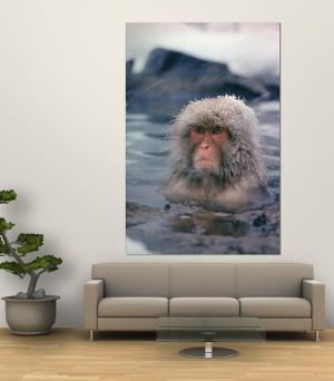 Japanese Macaque, Snow Monkey Sitting in Waters of Hot Spring in Shiga Mountains During a Snowfall by Co Rentmeester