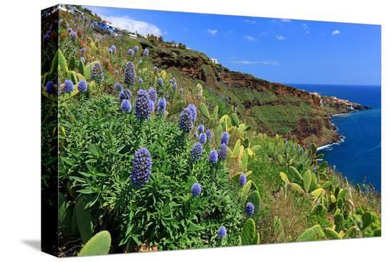 Coast Area at Ponta do Garajau near Canico, Madeira Island, Portugal--Stretched Canvas Print