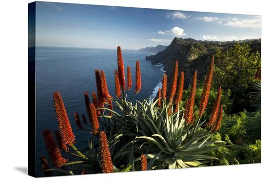 Coastal Landscape with Blooming Aloe, Madeira Island, Portugal--Stretched Canvas Print