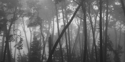 https://imgc.allpostersimages.com/img/posters/coastal-mist-though-monterey-pines-monterey-coast-california-usa_u-L-Q1CZWJV0.jpg?p=0