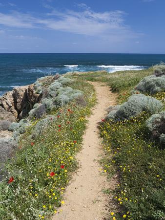 https://imgc.allpostersimages.com/img/posters/coastal-path-with-spring-flowers-near-chania-chania-region-crete-greek-islands-greece-europe_u-L-PFW1250.jpg?p=0