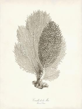 Greige Sea Fan by Coastal Print and Design
