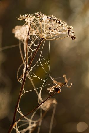 https://imgc.allpostersimages.com/img/posters/cobweb-on-dry-plant-nature-background-with-bokeh_u-L-Q1EXWWR0.jpg?artPerspective=n