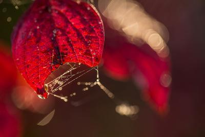 https://imgc.allpostersimages.com/img/posters/cobweb-with-dewdrops-on-a-red-leaf-dark-background-with-bokeh_u-L-Q1EXW5S0.jpg?artPerspective=n