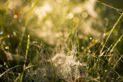 https://imgc.allpostersimages.com/img/posters/cobwebs-in-the-grass-with-bokeh-background_u-L-Q1EXWZ00.jpg?artPerspective=n