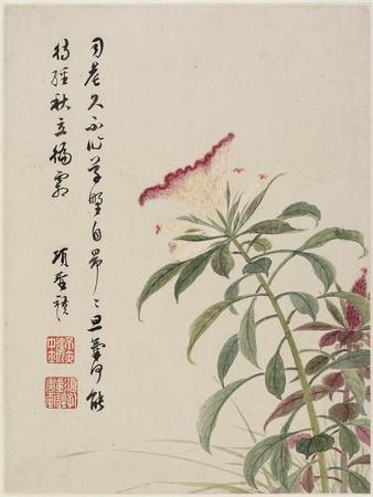 https://imgc.allpostersimages.com/img/posters/cock-s-comb-from-a-flower-album-of-ten-leaves-1656_u-L-PUSYCO0.jpg?p=0