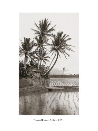 Coco Palms, Oahu, 1926