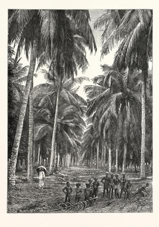 Cocoa-Nut Plantation in Ceylon, Sri Lanka