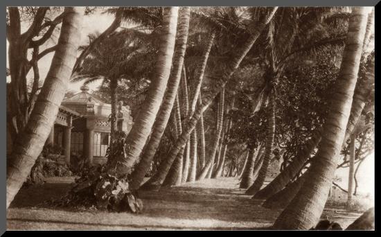 Coconut Lane, Waikiki, Hawaii, 1916--Mounted Print