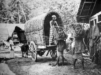 https://imgc.allpostersimages.com/img/posters/coconut-production-india-20th-century_u-L-PTTI220.jpg?p=0