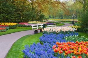 Many Spring Flowers in Many Colors by Colette2