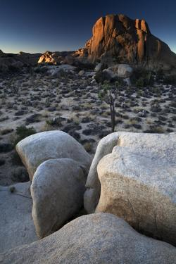 Landscape, Joshua Tree National Park, California, United States of America, North America by Colin Brynn