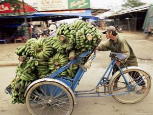 Man Transporting Bananas on Cyclo, Hue, Vietnam, Indochina, Southeast Asia, Asia by Colin Brynn