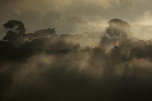 Rising Rainforest Mist, Peru, South America by Colin Brynn