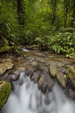 Waterfall, Semuc Champey, Guatemala, Central America by Colin Brynn