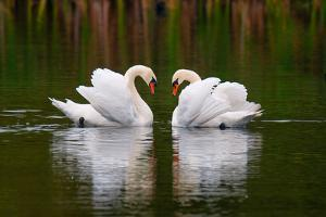Love Birds by Colin Carter Photography