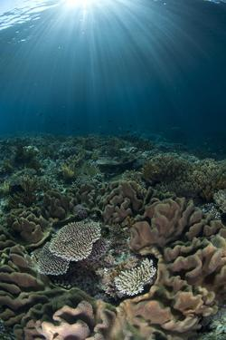 Coral reef habitat with sunbeams, Wetar Island, Barat Daya Islands, Lesser Sunda Islands by Colin Marshall