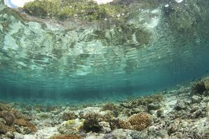 View of coral reef habitat in shallows, Potato Point, Fiabacet Island, West Papua by Colin Marshall