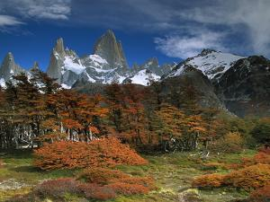 Mount Fitzroy and Lenga Beech (Nothofagus Pumilio) Trees, Los Glaciares National Park, Argentina by Colin Monteath/Minden Pictures