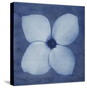 Floral Imprint I by Collezione Botanica
