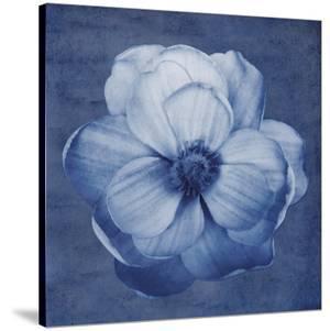 Floral Imprint II by Collezione Botanica