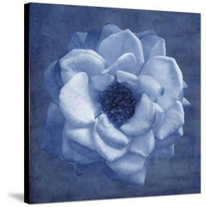 Floral Imprint III by Collezione Botanica