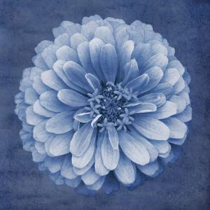Floral Imprint IV by Collezione Botanica
