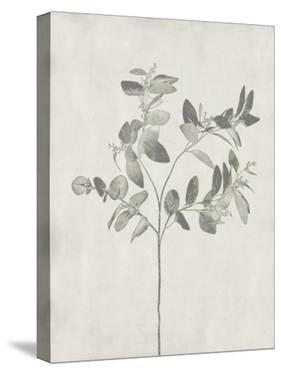 Floral Wild - Eucalyptus by Collezione Botanica