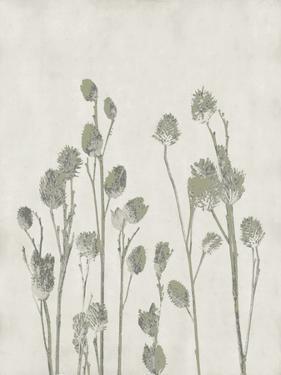 Floral Wild - Jimson by Collezione Botanica