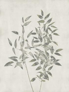 Floral Wild - Ruscus by Collezione Botanica