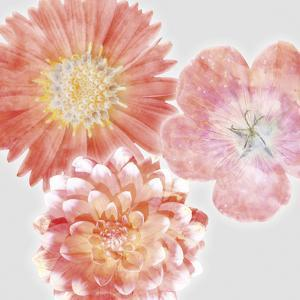 Luminescent Blooms by Collezione Botanica