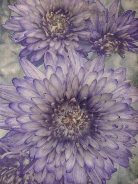 Ultraviolet by Collezione Botanica