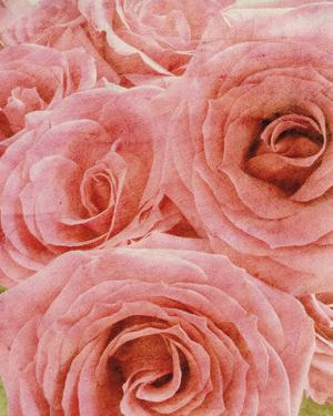 Vintage Romance II by Collezione Botanica