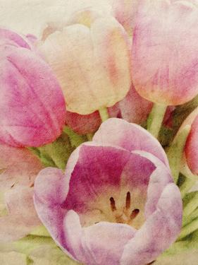 Vintage Tulip II by Collezione Botanica