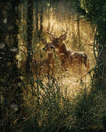 A Golden Moment by Collin Bogle