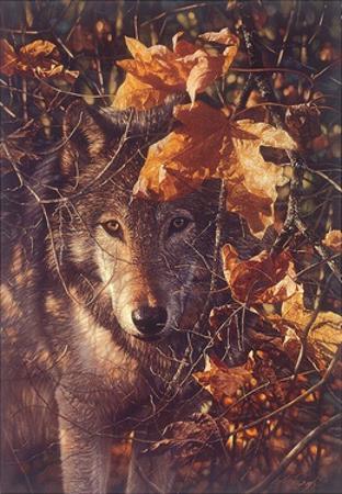 Nature's Cover by Collin Bogle