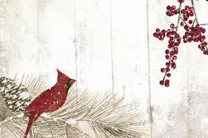 Cardinal Christmas V by Color Bakery