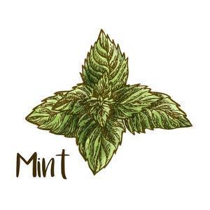 Mint by Color Me Happy