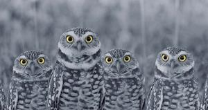 Pop of Color Burrowing Owl Family by Color Me Happy