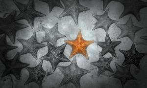 Pop of Color Orange Starfish by Color Me Happy