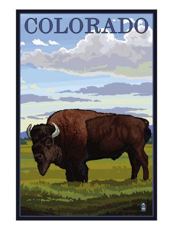 https://imgc.allpostersimages.com/img/posters/colorado-buffalo-solo-c-2009_u-L-Q1GOS9Z0.jpg?p=0