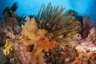 https://imgc.allpostersimages.com/img/posters/colorful-crinoids-and-soft-corals-adorn-a-reef-in-raja-ampat_u-L-PN8Z9I0.jpg?p=0
