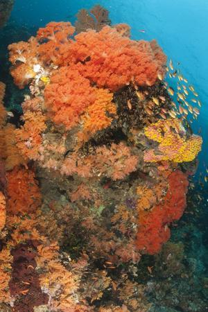 https://imgc.allpostersimages.com/img/posters/colorful-reefs-covered-in-orange-dendronephthya-soft-corals_u-L-PN8XEG0.jpg?p=0