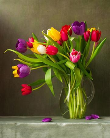 Colorful Tulips Still Life